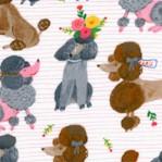 DOG-poodles-Y558
