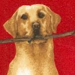DOG-retrievers-W881