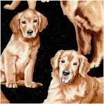 DOG-retrievers-X712