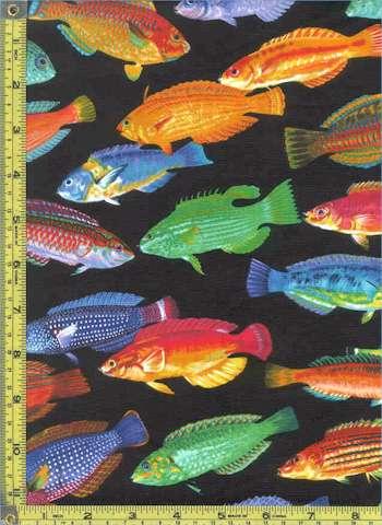 FISH-fish-C91