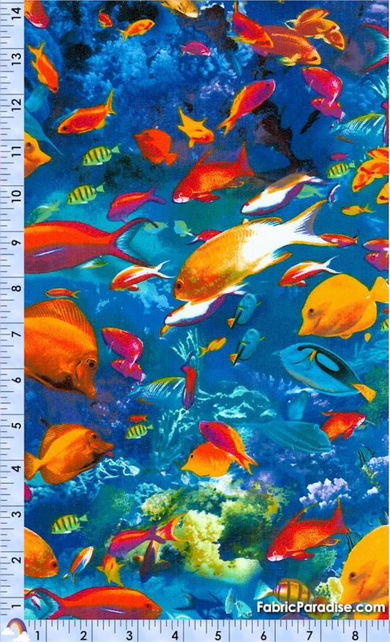FISH-fish-X517