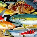 FISH-catalina-X364