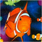 Life�s a Beach - Rainbow Clownfish