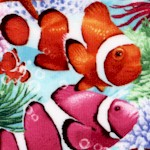 FISH-clownfish-Y890