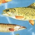 FISH-fish-C478