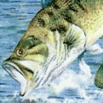 FISH-fish-W1