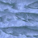 Nature's Etchings - Freshwater Fish