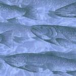 FISH-fish-W284
