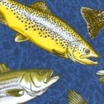 FISH-fish-W457