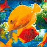 Life's a Beach - Coral Reef Fish Scenes