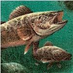 Sports Fisherman - Freshwater Fish - LTD. YARDAGE AVAILABLE