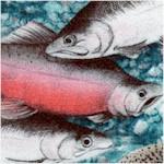 FISH-fish-Y231