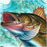 Four Seasons - Freshwater Fish (Digital) by John Q. Wright