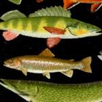 Gone Fishing - Beautiful Fish