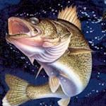 FISH-fish-Y983