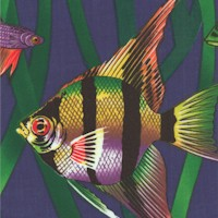 Exotica - Tropical Fish on Blue