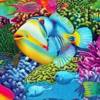 FISH-fish-Z999