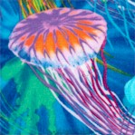 Colorful Jellyfish