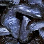 FISH-mussels-U904
