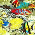 Real Reef Scenes