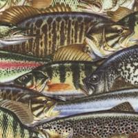 Keep it Reel - Fish Collage