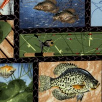 Keep it Reel - Fish and Fishing Equipment Collage