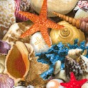 Landscape Medley - Packed Seashells - BACK IN STOCK!