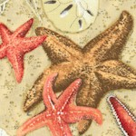 Beach Treasures - Tossed Starfish and Sand Dollars - LTD. YARDAGE AVAILABLE (.75 YD.) MUST BE PURCHA
