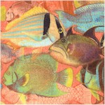 Tropical Dreams - Schools of Marine Fish in Peach by Kathleen Francour