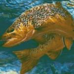 Troutman Basin - Real Fish Up Close!