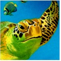 Beautiful Turtles and Coral - BACK IN STOCK!