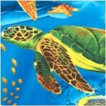 Real Turtle Ocean Scenes