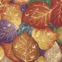Autumn into Winter - Dew-Kissed Leaves
