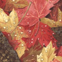 Autumn into Winter - Colorful Dew-Kissed Maple Leaves