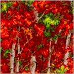 Naturescapes - Magnificent Autumn