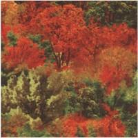 Autumn Scenic