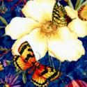 Butterfly Bouquet - Butterflies and Wildflowers