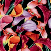 Exquisite Calla Lilies on Black