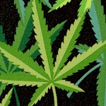 FLO-cannabis-X264
