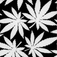 Cannabis Leaves in Black and White - Glows in the Dark!