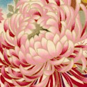 ORI-chrysanthemums-U335