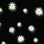 FLO-daisy-W589