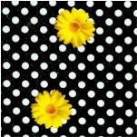FLO-daisy-Y104
