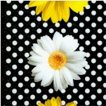 Oops A Daisy - Vertical Stripe Daisies on Polka Dots by Greta Lynn