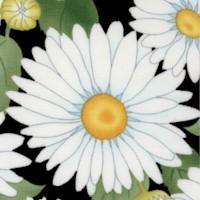 FLO-daisies-Z500