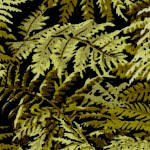 Floral Vignettes - Packed Ferns