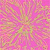 Neon Floral in Hot Pink and Green by Carla Miller