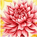 Flower Shop - Dazzling flowers on Cream