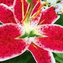 Floral Fascination - Mixed Bouquet