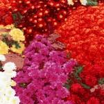 FLO-floral-W87